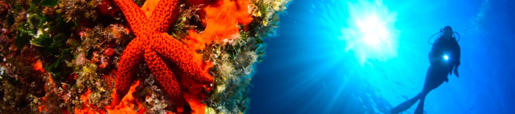 banniere-stage-photo-sous-marine-stephane-regnier