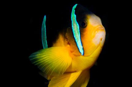 formation-photo-plongee-sous-marine-1