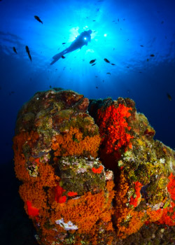 formation-photo-plongee-sous-marine-3