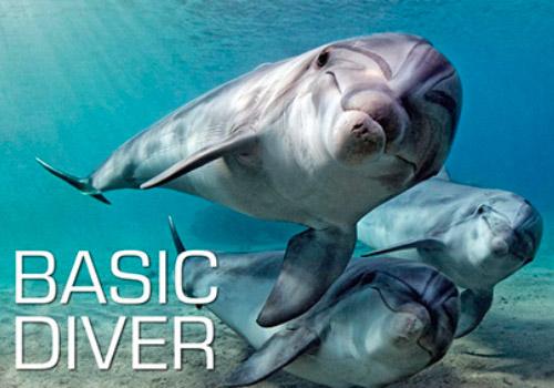 formation-plongee-basic-diver-argonaute-toulouse.jpg
